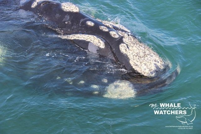 whale_watching034