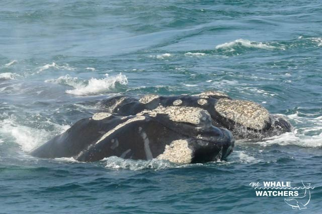 whale_watching04