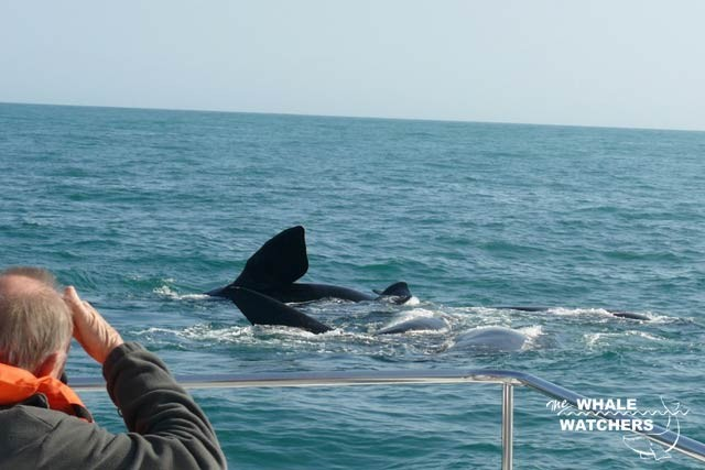 whale_watching08