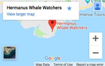 Whale Watching Google map