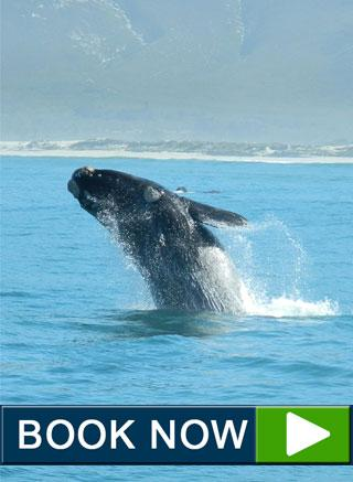 book now whale watching