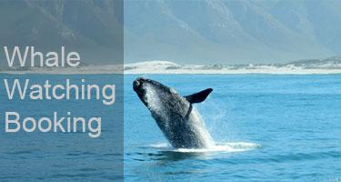 whale watching booking